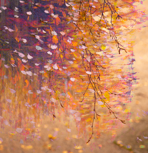 3-autumn-colours-impression-with-birch-twigs
