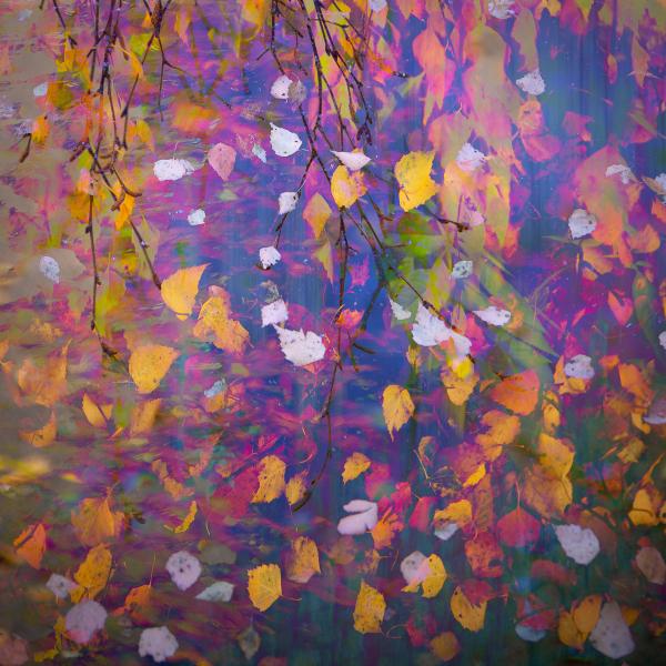 4-autumn-colours-hedgerow-leaves