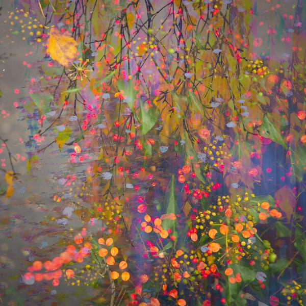 2-autumn-colours-hedgrow-orange-berries-impression