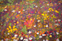 1-autumn-colours-hedgerow-tapestry