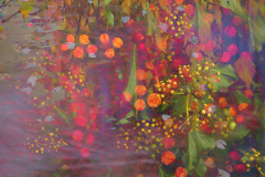 6-autumn-tapestry- hedgerow-berries