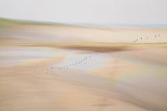 coastal-impressions-Holme