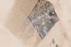 coastal-impressions- Holme-John-Dory