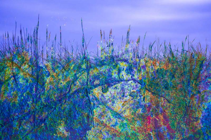 saltmarsh-blues