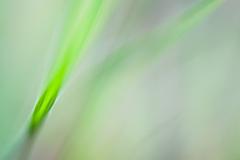 Impressionist-grasses